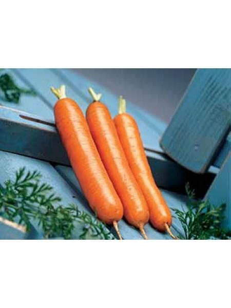Дордонь F1 - морковь, 50 000 семян, фракция 1,4 - 1,6, Syngenta (Сингента), Голландия