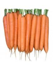 Элеганс F1 - морковь, 100 000 семян (1,6-1,8), Nunhems (Нунемс) Голландия