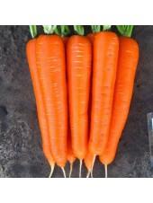 Элеганза F1 - морковь , калибровка улучш. 1,6-1,8, 100 000 семян, Nunhems (Нунемс) Голландия