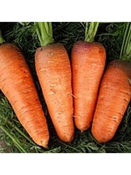 Болтекс - морковь, 0,5 кг, Clause Франция