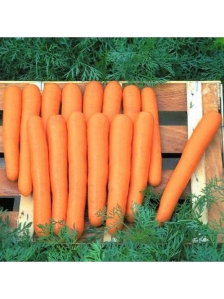 Маэстро F1 - морковь, 100 000 семян, Nickerson Zwaan