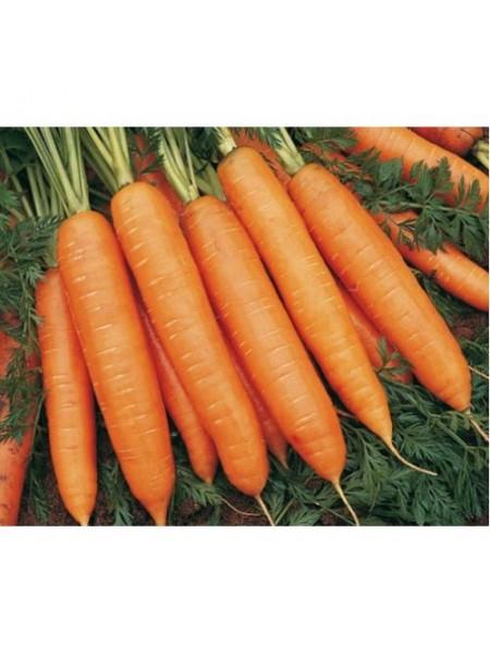 Бангор F1 - морковь, 100 000 семян (2,2-2,4 мм), Bejo Голландия