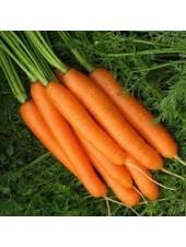 Карведжо F1 - морковь, 200 000 семян, Seminis (Семинис) Голландия