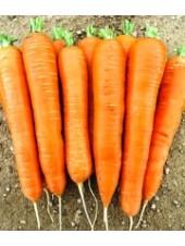 Карболи F1 - морковь, 200 000 семян, Seminis (Семинис) Голландия