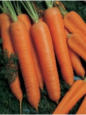 Наполи F1 - морковь, 100 000 семян (1,6-1,8 мм), Bejo Голландия