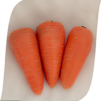 SV 3118 DH F1 - морковь, 1 000 000 семян (1,6-1,8), Seminis (Семинис) Голландия