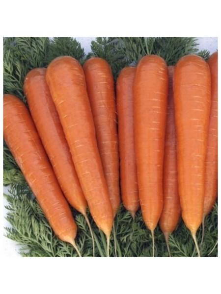Музико F1 - морковь, 100 000 семян, Nickerson Zwaan