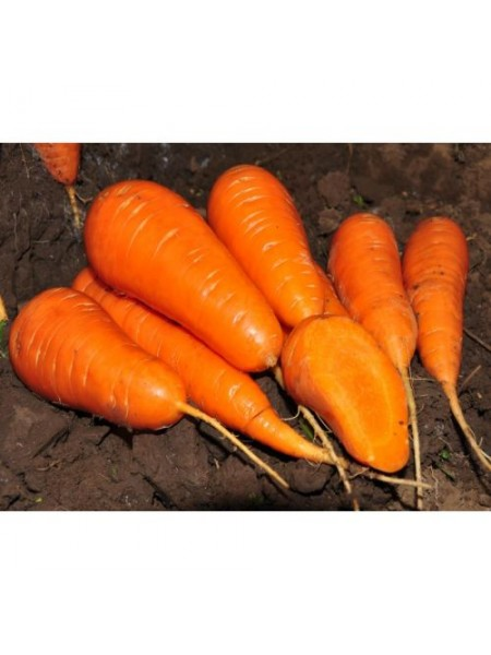 Шантане Ред Кор - морковь, 500 г, Agri Saaten Германия