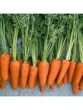 Шантане Ред Коред - морковь, 500 000 семян, Nickerson Zwaan