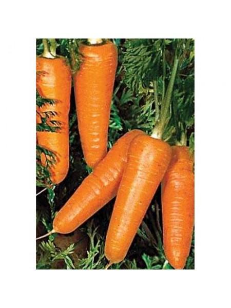 Редко F1 - морковь, 100 000 семян, Syngenta (Сингента), Голландия