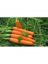 Роял Форто - морковь, 100 г семян, Seminis (Семинис) Голландия