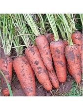 Санта Круз F1 - морковь, 200 000 семян, Seminis (Семинис) Голландия