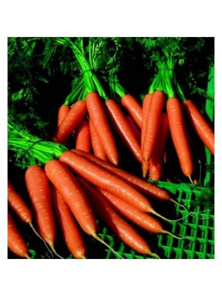 Волкано F1 - морковь, 100 000 семян калиброванных, Nickerson Zwaan
