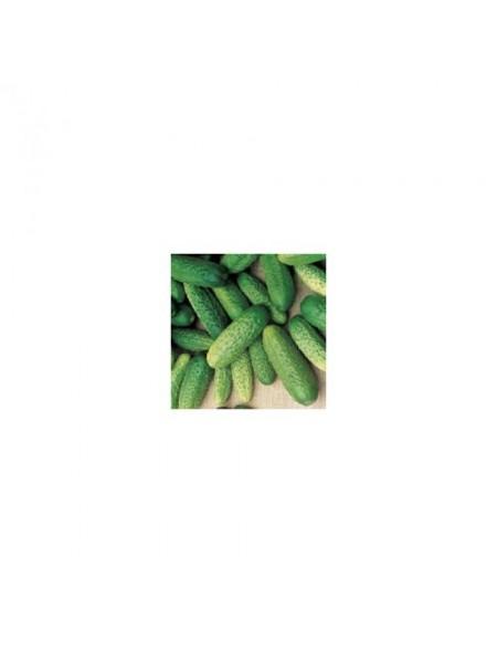 Анзор F1 - семена партенокарпического огурца, 250семян, Bejo / Бейо, Голландия