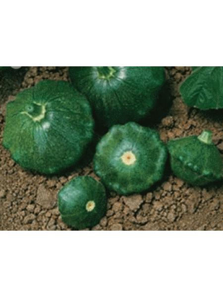 Старшип F1 - патиссон зеленый, 500 семян, Syngenta (Сингента), Голландия