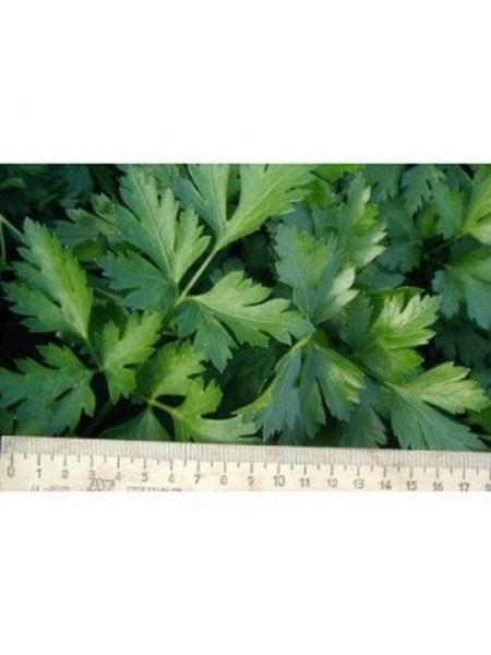 Новас - петрушка листовая, 100 г, Clause Франция