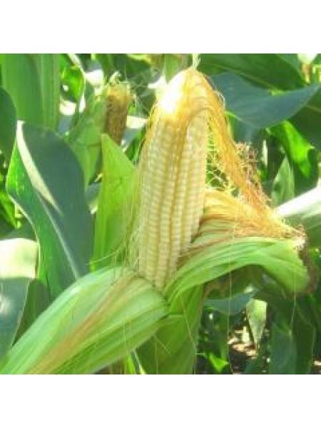 P8529 - кукуруза, 80 000 семян, Pioneer (Пионер), Украина