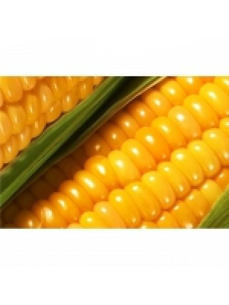 P9175 - кукуруза, 80 000 семян, Pioneer (Пионер)