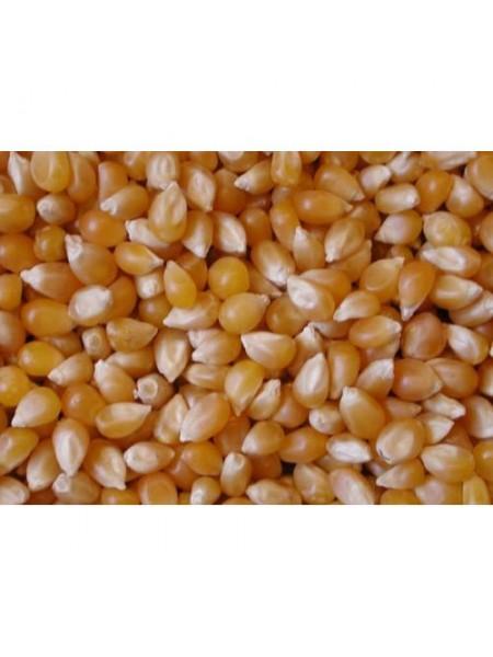 Сиско Круизер - кукуруза, 80 000 семян, Syngenta (Сингента), Голландия
