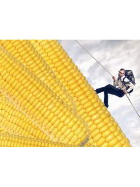 СИ Эладиум - кукуруза, 80 000 семян, Syngenta (Сингента), Украина