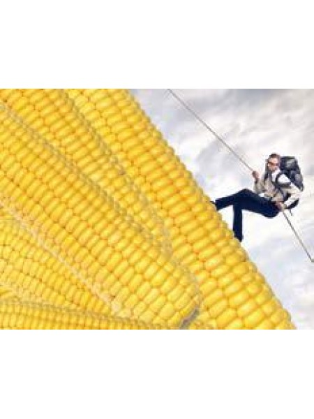 Эладиум - кукуруза, 80 000 семян, Syngenta (Сингента), Голландия