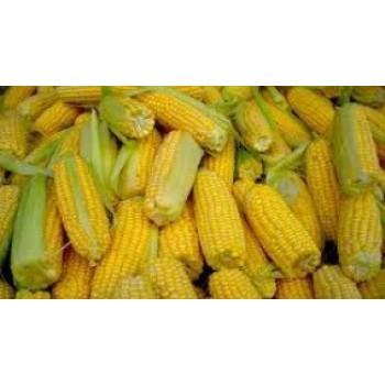 Купить PR38N86 - кукуруза, 80 000 семян, Pioneer (Пионер) в Украине, фото, описание, озывы