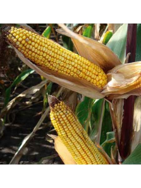 ДКС 4490 - кукуруза, 80 000 семян, Monsanto США