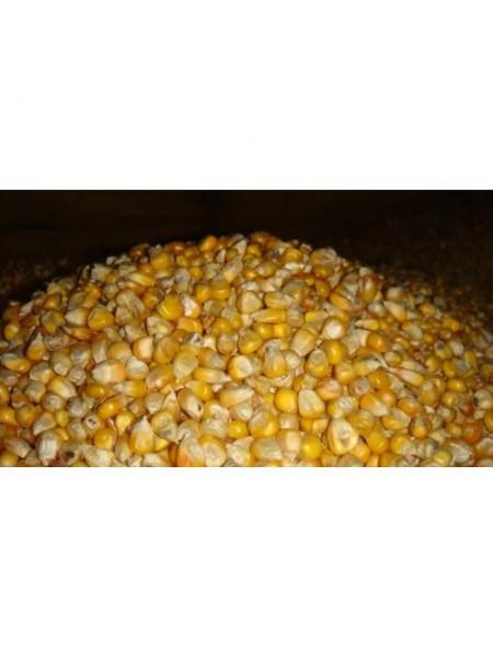 Хмельницкий F1 - кукуруза кормовая, 80 000 семян, Мнагор, Украина