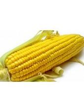 Делитоп (Форс Зеа) - кукуруза, 80 000 семян, Syngenta Голландия