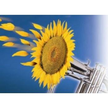 Джаззи - подсолнечник, 150 000 семян, Syngenta Голландия