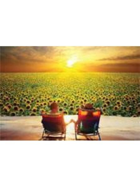 Тристан Круизер - подсолнечник, 150 000 семян, Syngenta Голландия