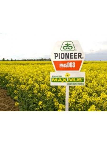 PX100CL - рапс озимый, Pioneer (Пионер)