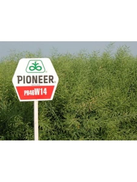 46W14 , рапс, 1 п.е. (2 млн. шт) Pioneer/Пионер