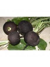 Дуэнья - редька черная, 5 кг, Nasko Украина