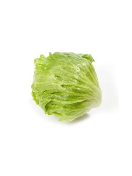 Аргентинас - салат кочанный, 1000 семян дражированных, Rijk Zwaan (Рийк Цваан), Голландия