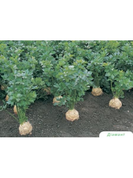 Диамант - семена сельдерея корневого, 10 000 семян, Bejo/Бейо (Голландия)