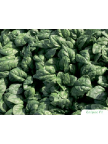 Спирос F1 - семена шпината, 50 000 семян, Bejo/Бейо (Голландия)