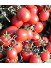 Уно Россо F1 - томат детерминантный, 1 000 семян, United Genetics