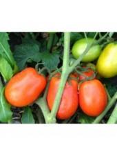 Диадема F1 - томат детерминантный, 1000 семян, Nikerson-zwaan (Голландия)Голландия