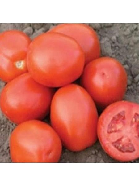 Адванс F1 - томат детерминантный, 25 000 семян, Nunhems (Нунемс) Голландия