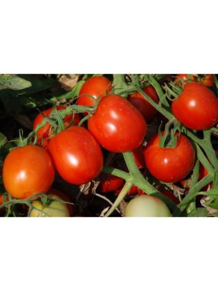 Аксель F1 - томат детерминантный, 1000 семян, Esasem Италия