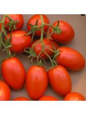 Дино F1 - томат детерминантный, 5 000 семян, Clause (Клоз), Франция