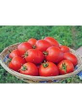 Намиб F1 - томат детерминантный, 500 семян Syngenta