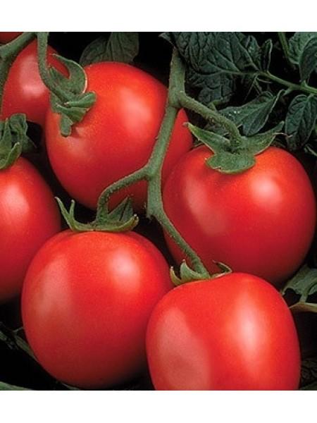 Рио Гранде - томат детерминантный, 500 г, Agri Saaten Германия