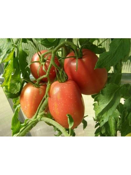 Рио Гранде - томат детерминантный, 250 г, Griffaton Франция