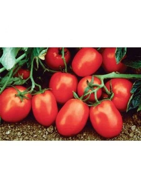 Рио Гранде - томат детерминантный, 0,5 кг, (Lark Seeds)