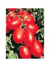 Рио Гранде - томат детерминантный, 500 грамм, Nickerson Zwaan