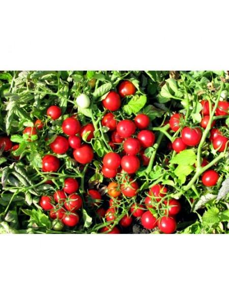 Руфус F1 - томат детерминантный, 1000 семян, Esasem Италия