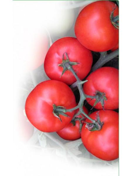 Вирта F1 - томат детерминантный, 1000 семян, KITANO