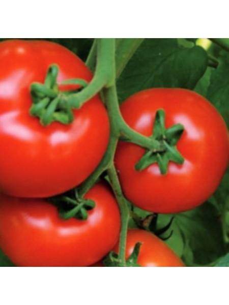 Аламина F1 - семена томата индетерминантного, 100 семян, Rijk Zwaan/Рейк Цван (Голландия)